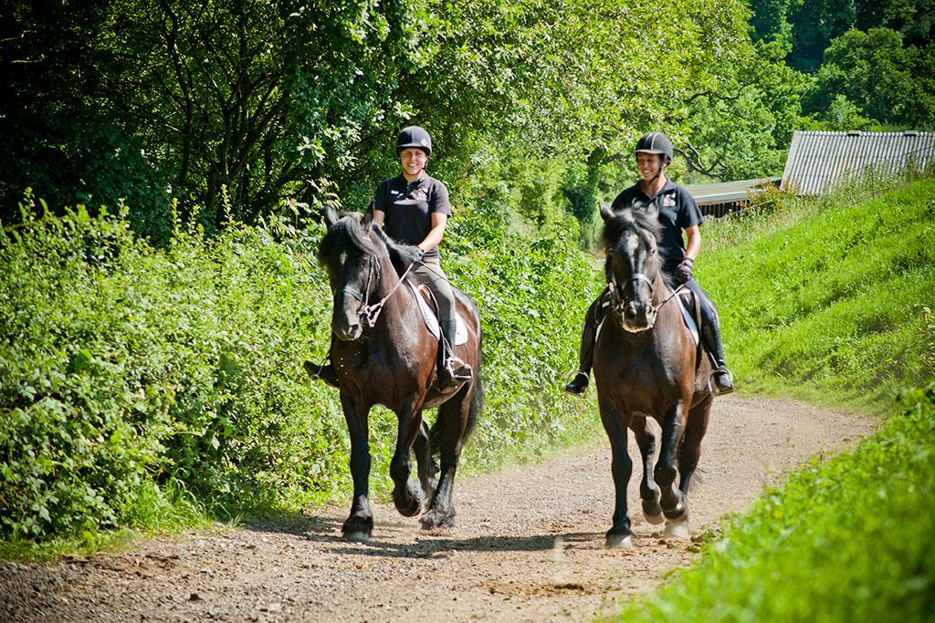 Équitation en forêt